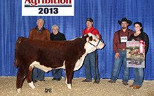 Reserve Junior Calf Champion at Agribition
