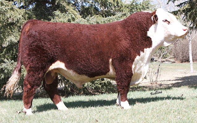 SQUARE-D MR BEEF 465A